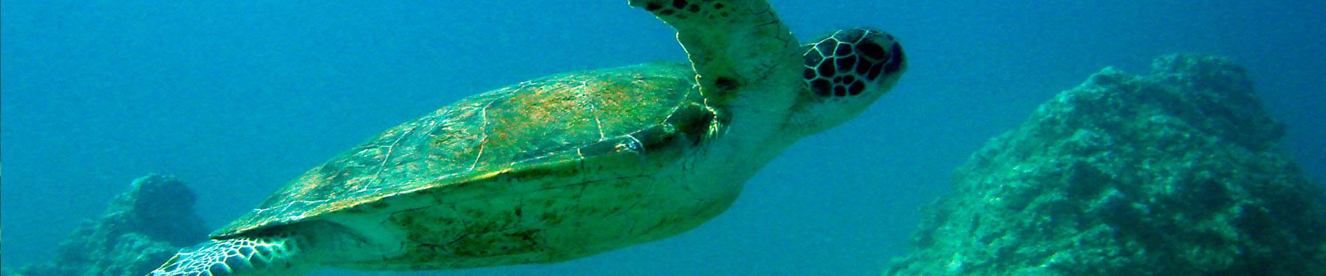 Sea Turtle Awareness