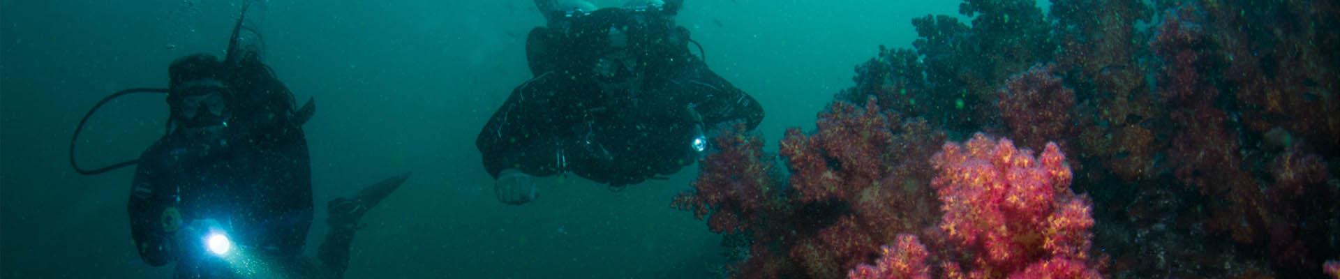 Multilevel Diver Specialty course