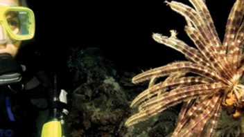 PADI Night Diver Specialty course.