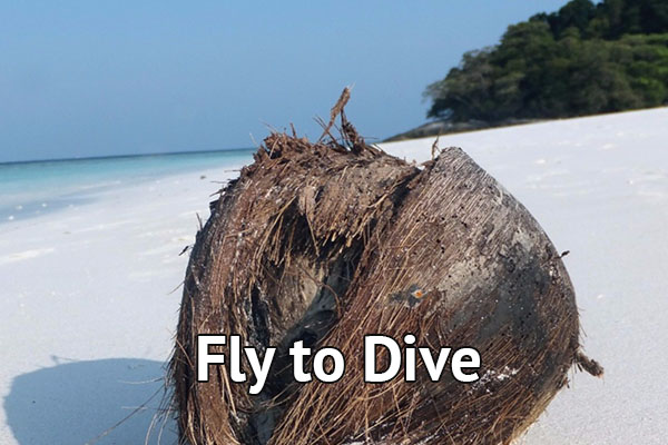 Fly to Dive