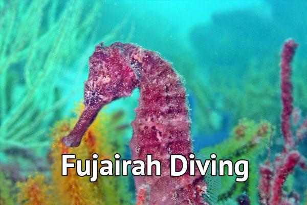 Fujeirah Diving